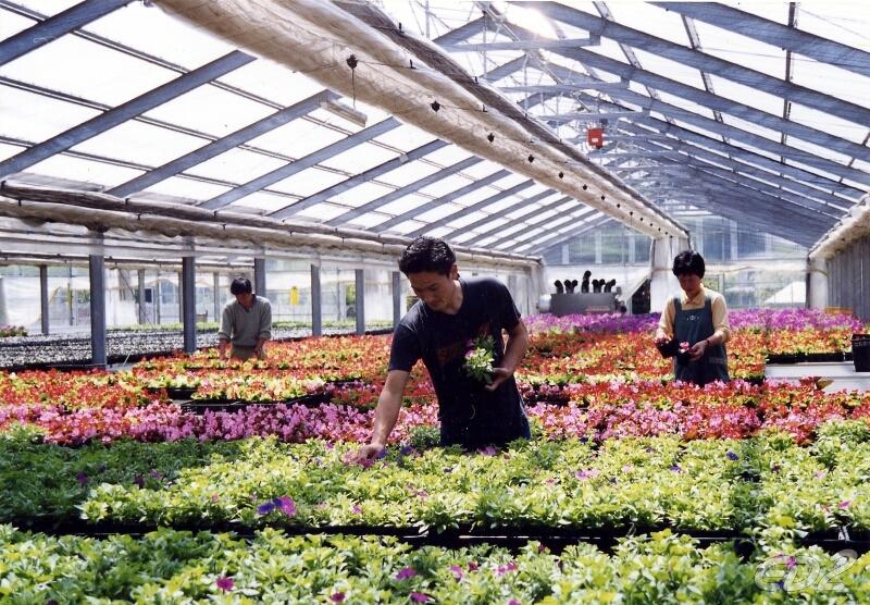 Đơn hàng nông nghiệp trồng hoa, trồng rau trong nhà kính