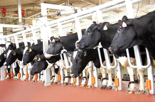 Đơn hàng chăn nuôi thuộc ngành nông nghiệp Nhật Bản